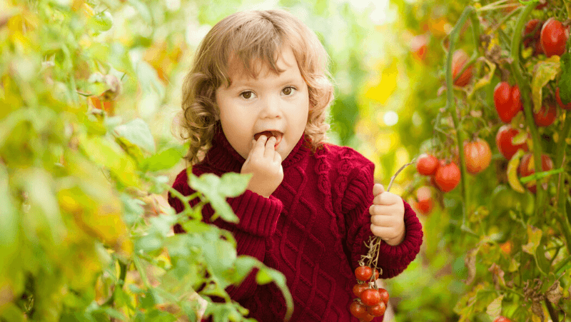 cherry-tomato-fun-for-kids_1575962014430