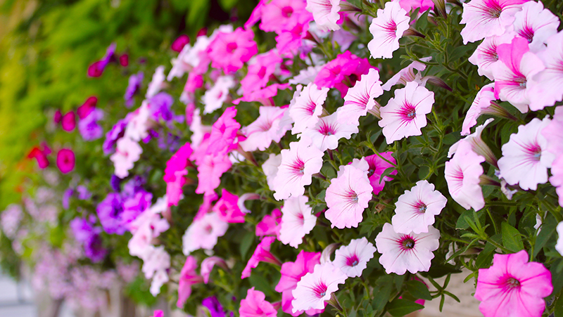 flowers-for-summer-colour_1565240416818