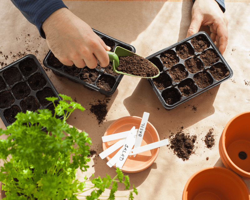 how-to-grow-from-seed_1585614425344