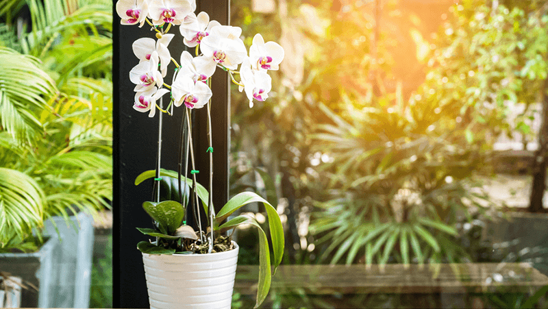 how-to-re-pot-orchids_1565057366083