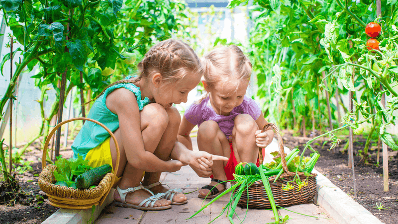 school-gardens-and-linking-to-curriculum_1576214044707