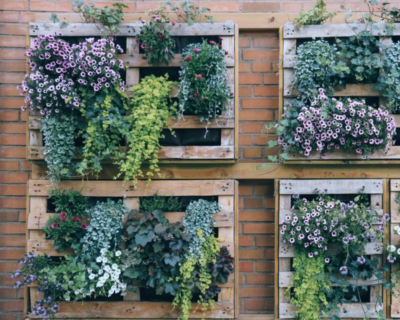 Vertical Gardens Are In Vogue | Yates Gardening