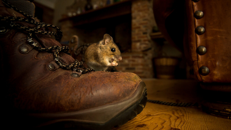 rat-and-mice-second-image
