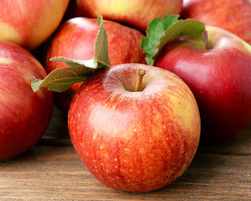 How to grow Apple Trees