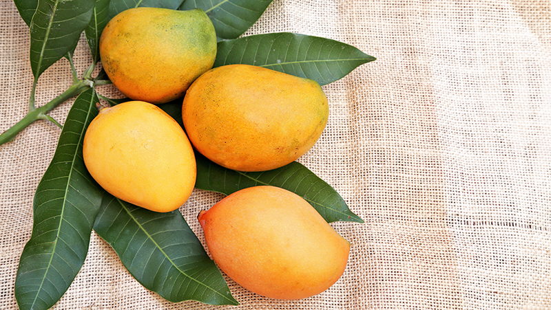 how-to-grow-mango_1551154996372
