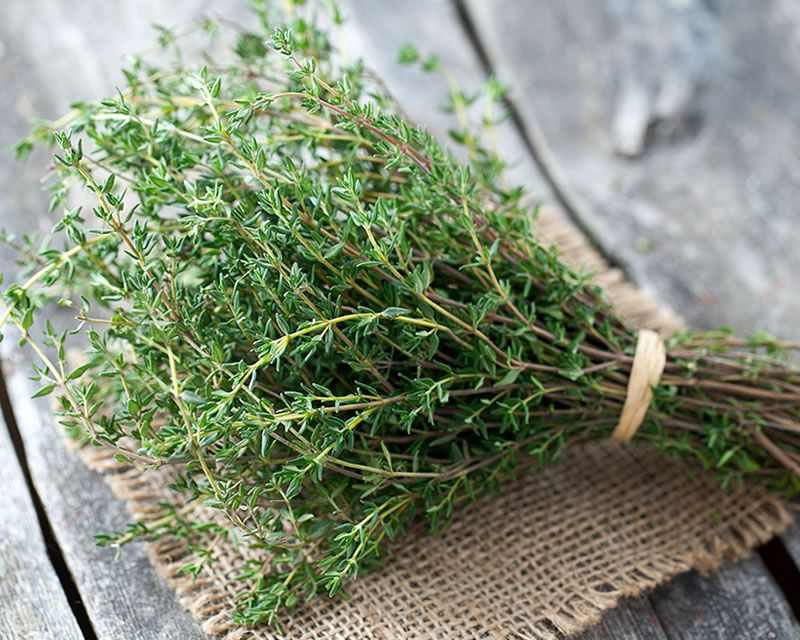 Image result for pot of thyme