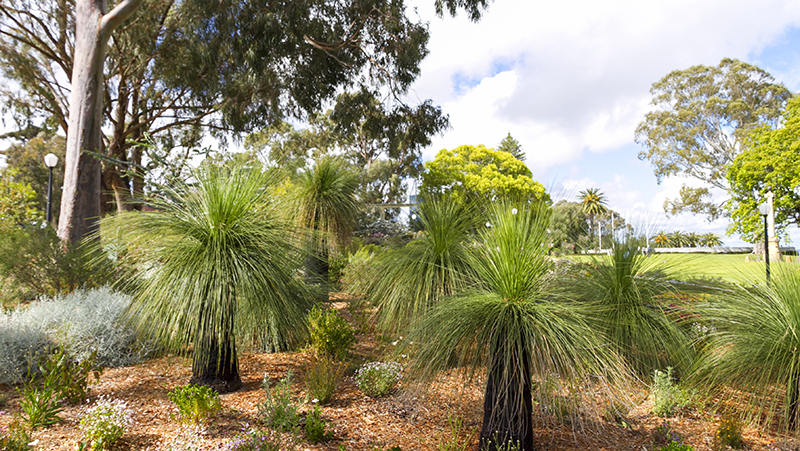 how-to-grow-grass-tree_1551160396780