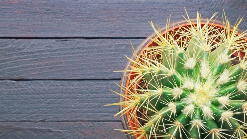 how-to-grow-golden-barrel-cactus_1551160445022