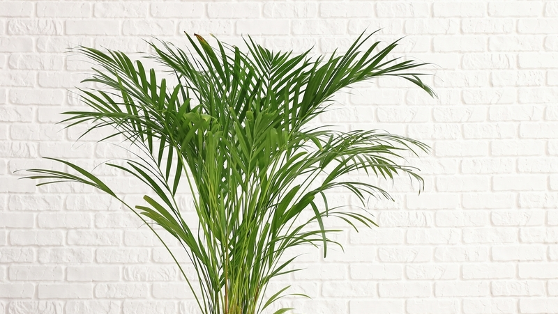 how-to-grow-palms_1551840146257
