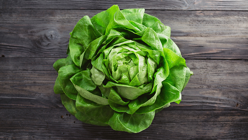 how-to-grow-lettuce_1551160523918