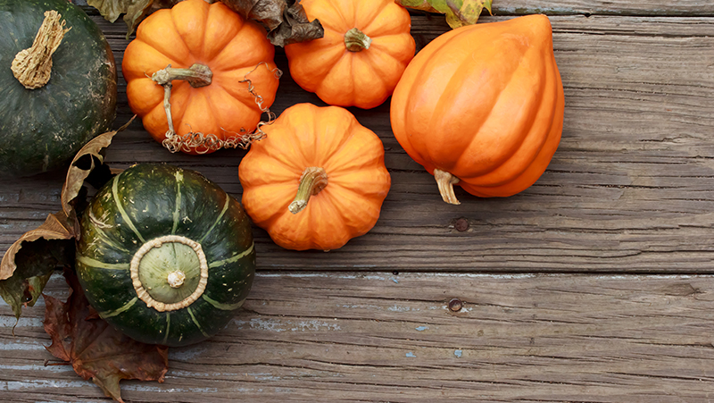 how-to-grow-pumpkin_1551160511567