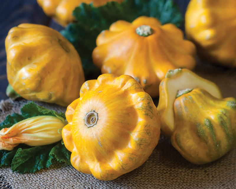 how-to-grow-squash_1551160530956