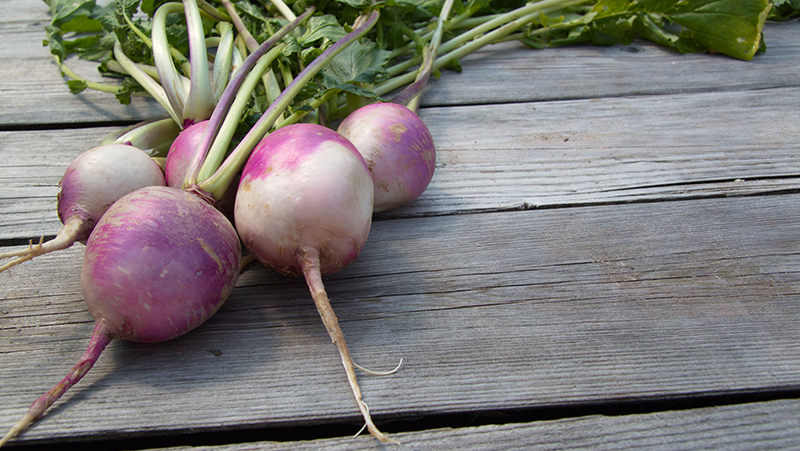 how-to-grow-turnips_1551160515511